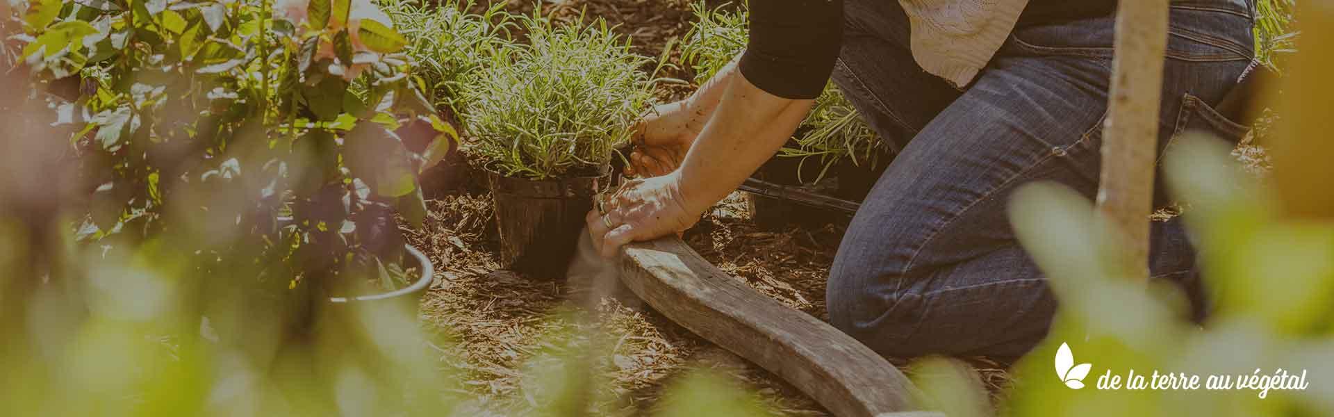 Terra Veggie, de la terre au végétal